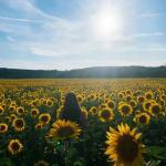 Bild des Benutzers Sophie_sunflower